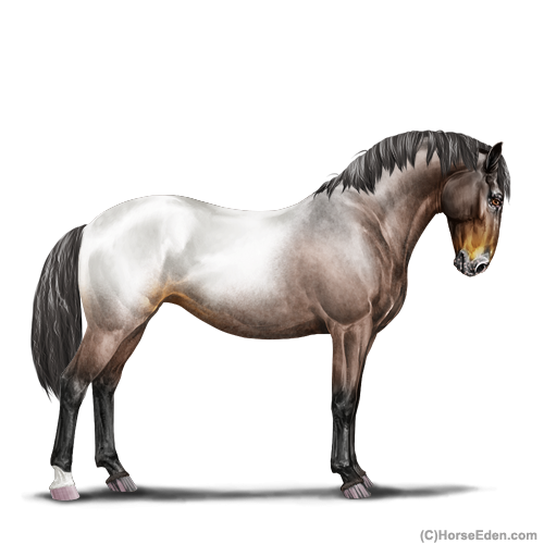 Horse Eden